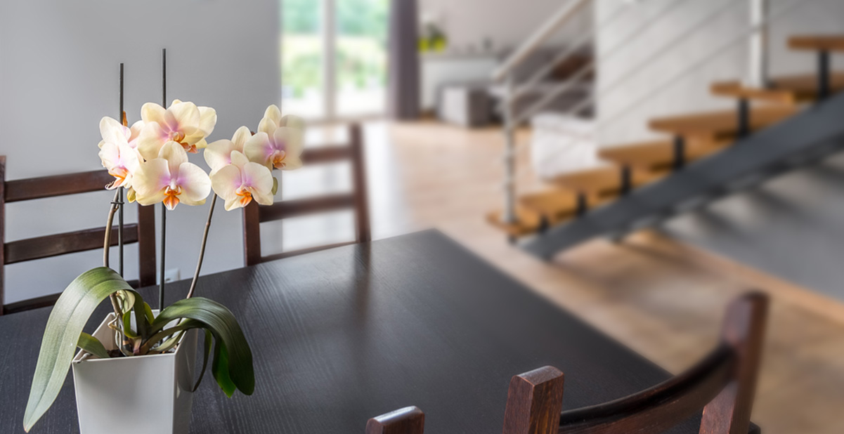 5-orquideas